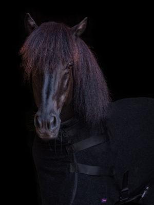 Schwarzer Isländer trägt hochgeschlossene schwarze Abschwitzdecke aus Fleece
