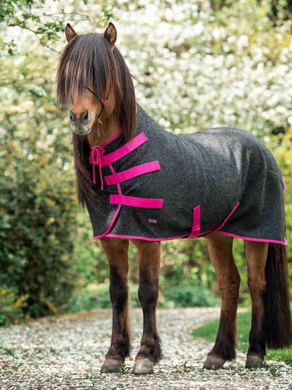 Islandpferd trägt Abschwitzdecke aus Wolle in Pink