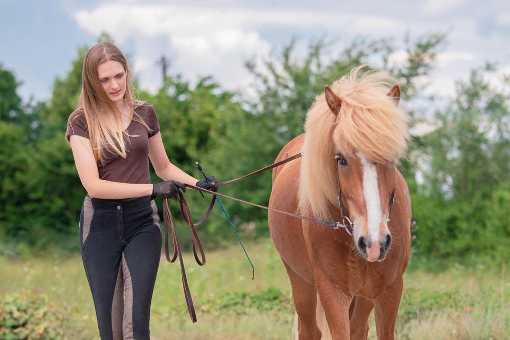 Bodenarbeit mit Pferd