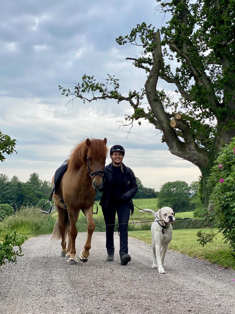 Pferd Reiter und Hund