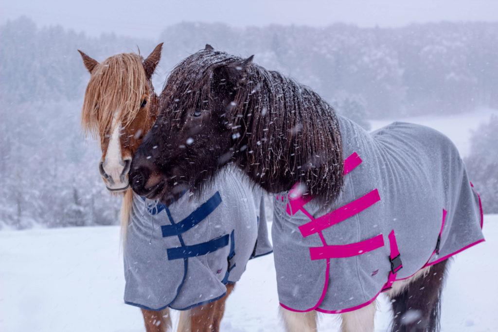 Zwei Isländer im Winter mit Abschwitzdecke
