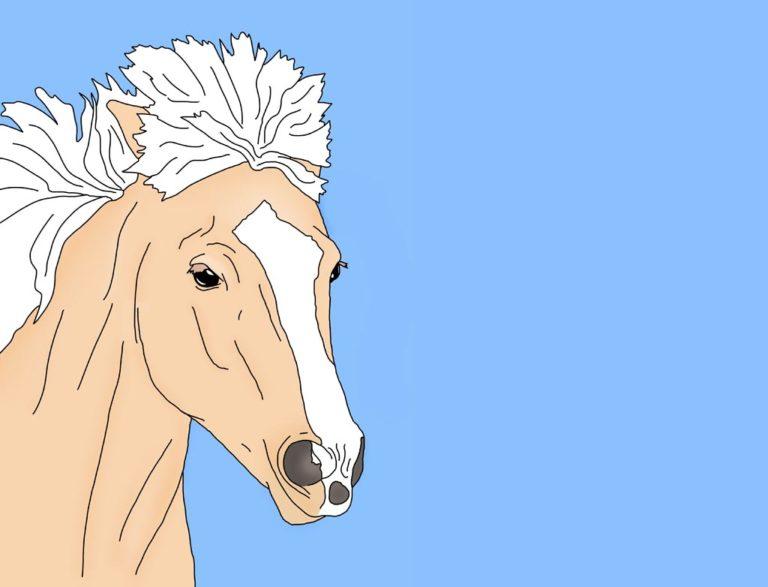 Illustration Mein erstes Islandpferd