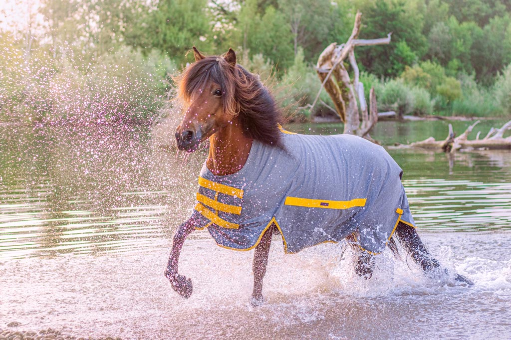 Islandpferd trägt Regendecke
