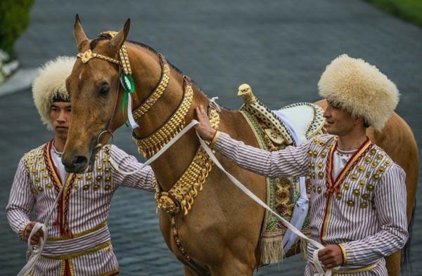 Geschmücktes Pferd