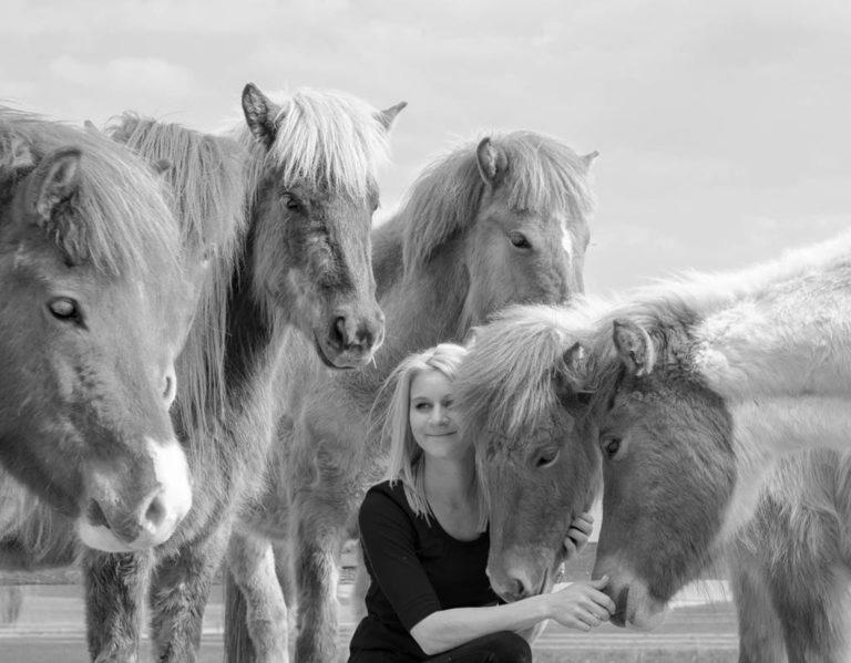 Mensch in Isländer Herde