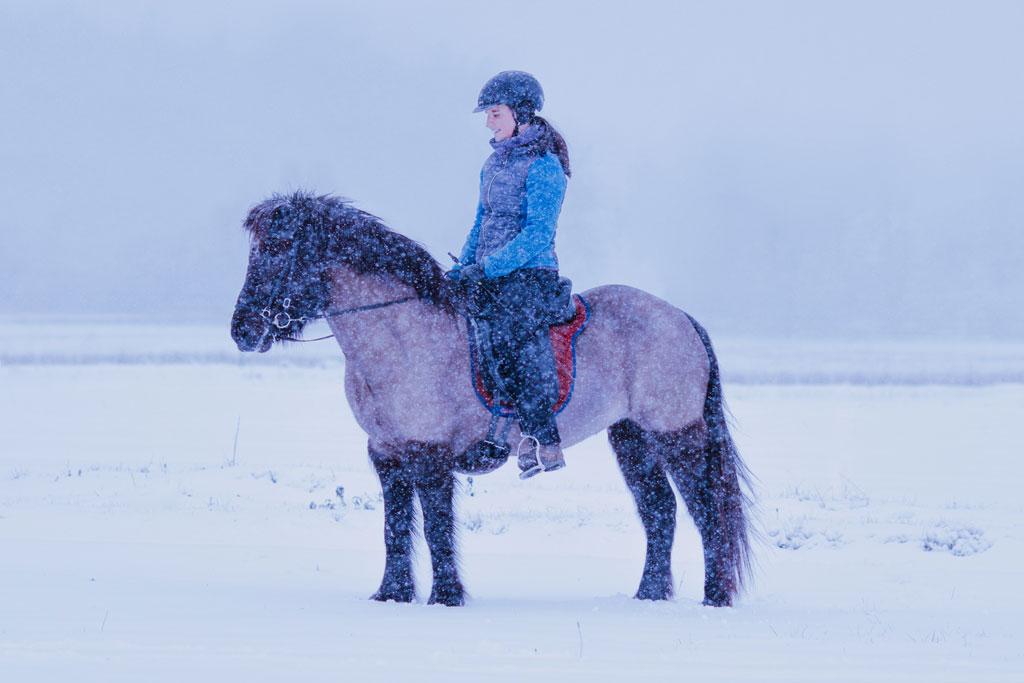 Pferdetraining im Winter