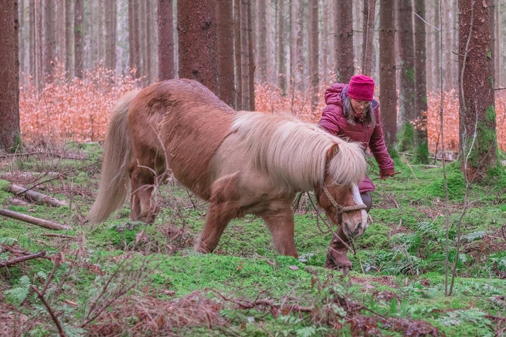 Pferd trainiert seine Trittsicherheit