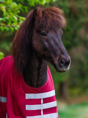 Pferd trägt Regendecke Weinrot